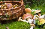 D�couverte des champignons